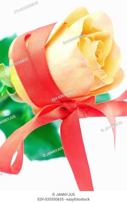 beautiful orange rosewith red ribbon isolated on white