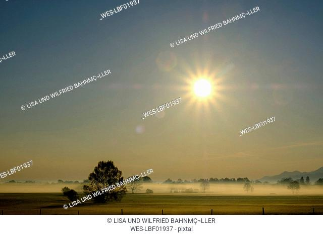 Germany, Bavaria, Upper Bavaria, Bad Feilnbach, morning fog over moor