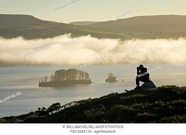 Point Reyes National Seashore, Marin County, California, USA, hiker taking photo on Tomales Point, overlooking Tomales Bay, Hog Island, and west Marin hills