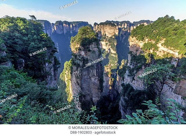 China, Hunan Province, Zhangjiajie National Forest Park UNESCO World Heritage Site, Hallrlujah Mountains Floating Mountains, Avatar site, morning