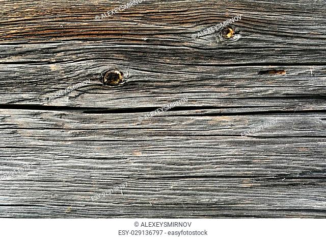 Timber industry natural abstract background: rough surface of gray weathered sawed wood log with cracks, splits and scratchs closeup view, natural texture