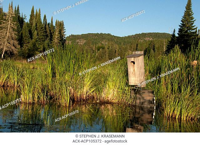 Nesting Box for Wood Duck (Aix sponsa) on beaver pond in boreal forest near Lake Superior