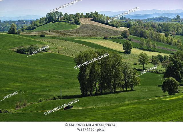 View on hills with cultivated vineyards and woods. Piedmont, Italy
