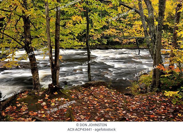 Oxtongue River rapids and autumn foliage, Oxtongue Lake, Ontario, Canada