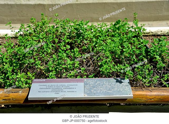Braille plant identifier in the sensory garden of the Botanical Garden, Rio de Janeiro, Brazil, 04.2017