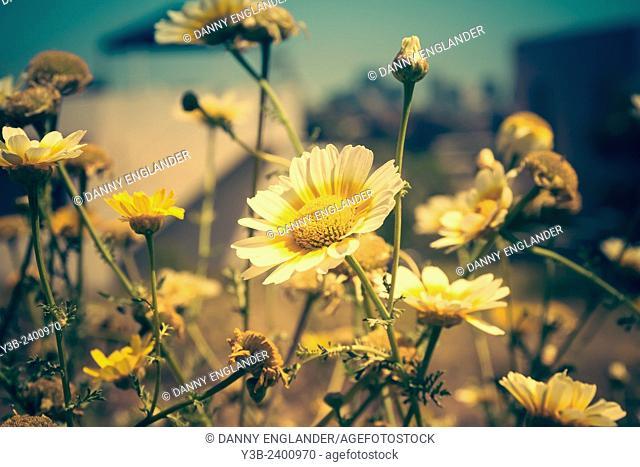 Wildflowers growing in a field vintage-look