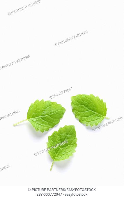 Three Melissa Officinalis Leaves On White Background