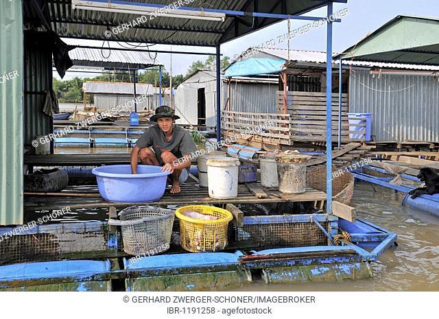 Young man, washing fresh fish on the platform of a floating fish farm, Vinh Long, Mekong Delta, Vietnam, Asia