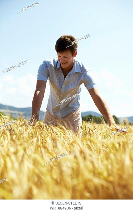Man Standing In Wheat Field, Croatia, Dalmatia, Europe