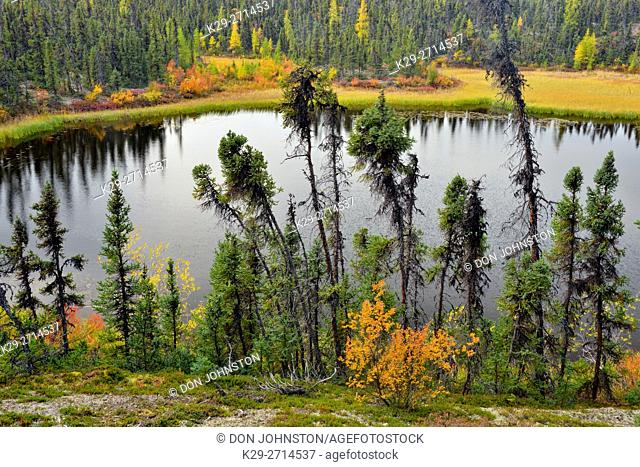 A boreal pond with sutumn foliage near Ennadai Lake, Arctic Haven Lodge, Ennadai Lake, Nunavut, Canada