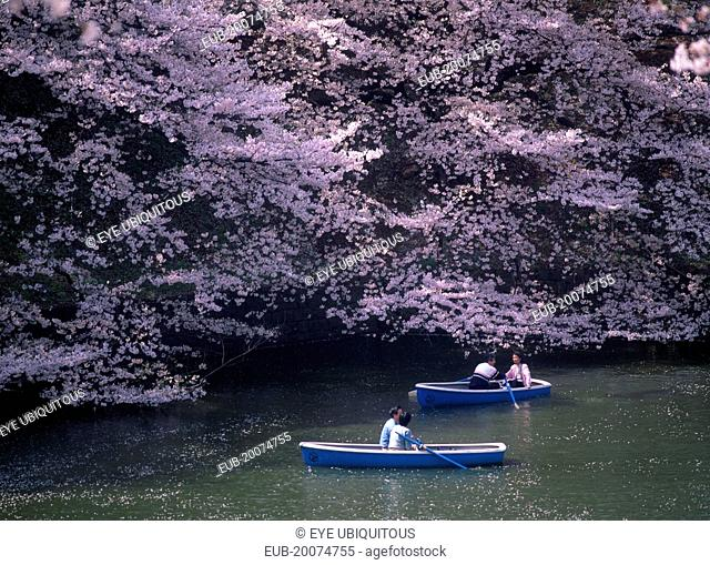 Chidorigafuchi Park. Imperial Palace. Boating lake with people on blue boats surrounded by overhanging pink Cherry Blossom trees