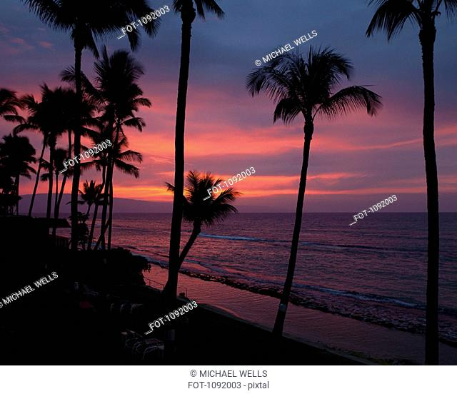 Dusk and silhouetted palm trees at beach in Maui, Hawaii