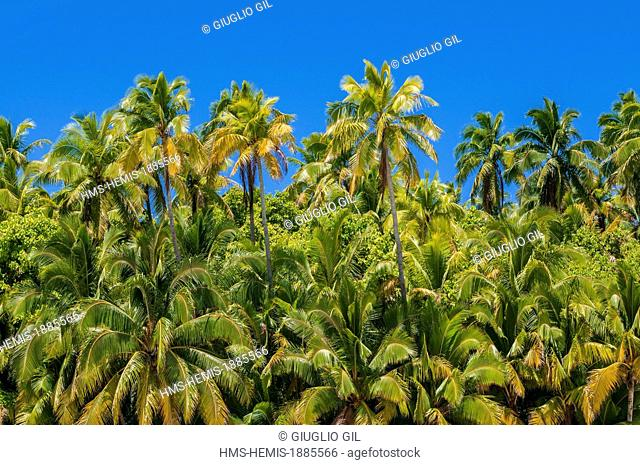 Cook Islands, Aitutaki Island, vegetation view from the lagoon