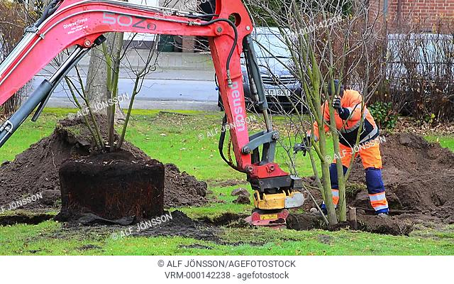 Planting a tree with excavator