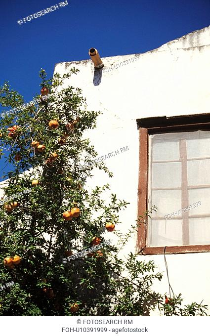 Pomegranate tree in front of Turkish house