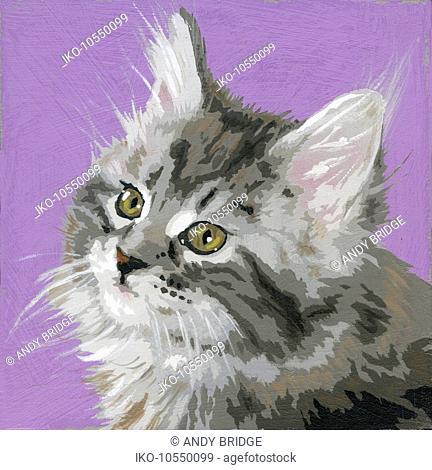 Portrait of long haired tabby kitten