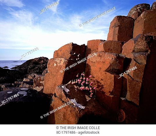 Rocks at a causeway, Giant's Causeway, County Antrim, Northern Ireland