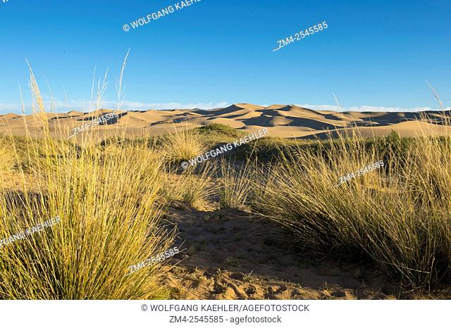 View of the Hongoryn Els sand dunes in the Gobi Desert in southern Mongolia with grasses in the foreground