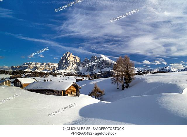 Alpe di Siusi/Seiser Alm, Dolomites, South Tyrol, Italy. Winter landscape on the Alpe di Siusi/Seiser Alm with the peaks of Sassolungo / Langkofel and...