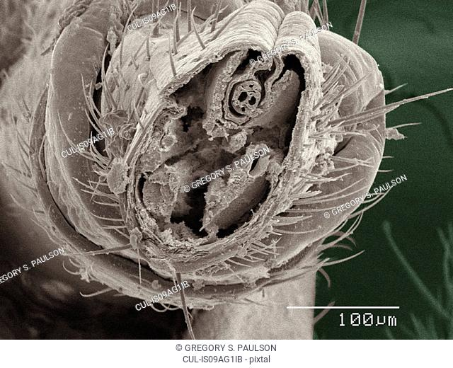 Coloured SEM of cricket mouthparts