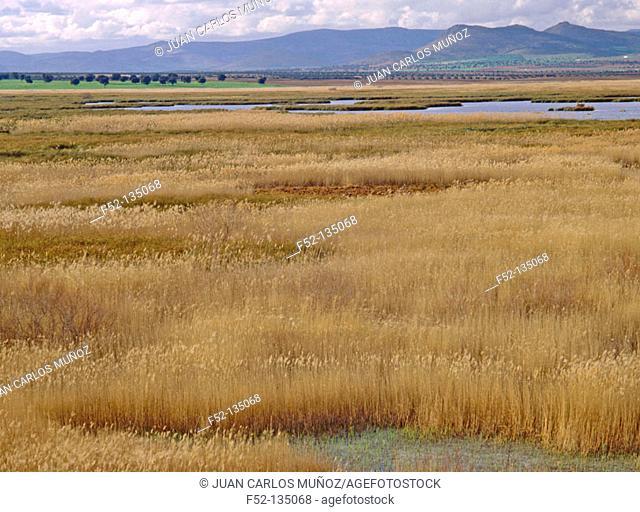 Tablas de Daimiel National Park. Ciudad Real province. Spain