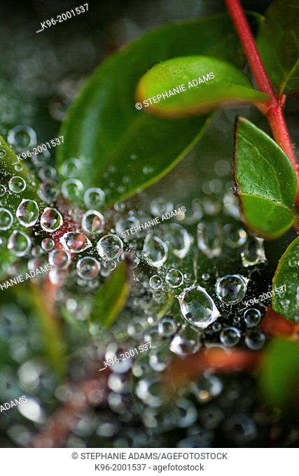 dew drops on spider web