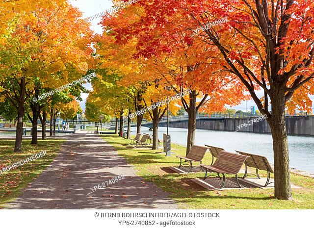 park with autumnal trees at vieux port, Montreal, province Quebec, Canada