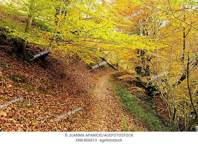 Orabidea is a forest spot, located in Baztan, an area of the north of Navarra, close to the French border. There is a path at the end of Orabidea's road leading...