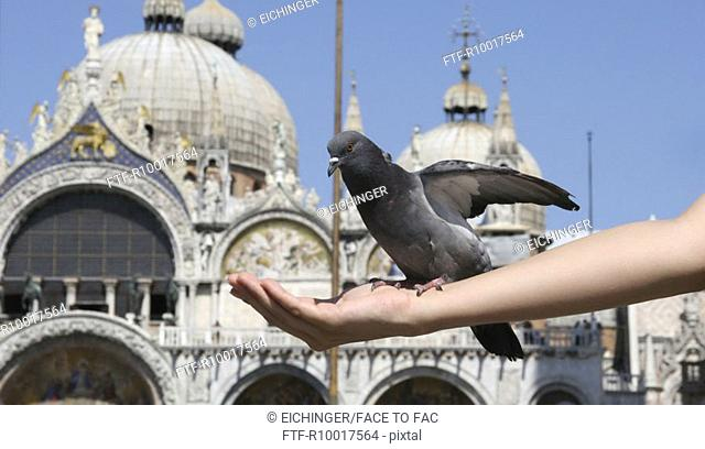 Pigeon perching on woman's hand, outdoors