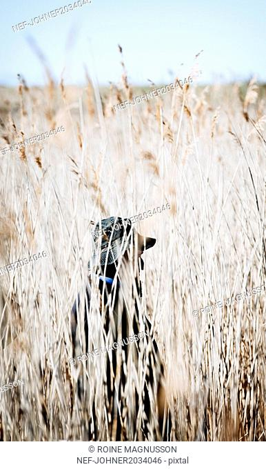 Person in tall grass