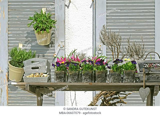 Small flowerpots and herbs on balcony as a spring decoration, close-up