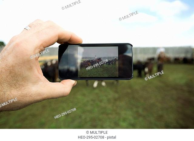 Man photographing cattle ranchers with camera phone