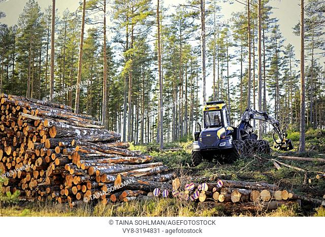 Salo, Finland - November 18, 2018: Logging site in Finnish forest in autumn sunlight with stack of birch logs and Ponsse Ergo forest harvester