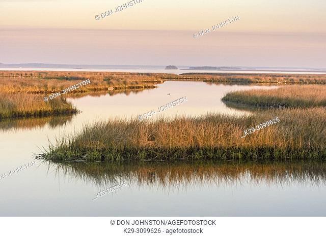 Salt water marshes at dawn, St. Marks NWR, Florida, USA
