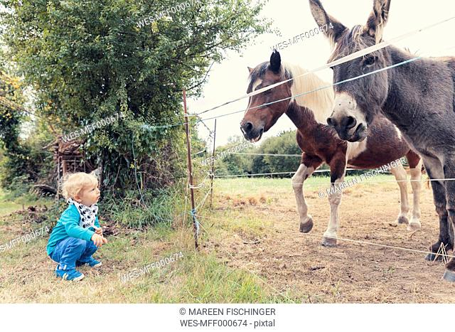 Little boy watching a horse and a donkey