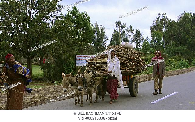 Shashemene Ethiopia Africa Oromo tribe farming members bringing farm crops to town to sell on donkey carts #8