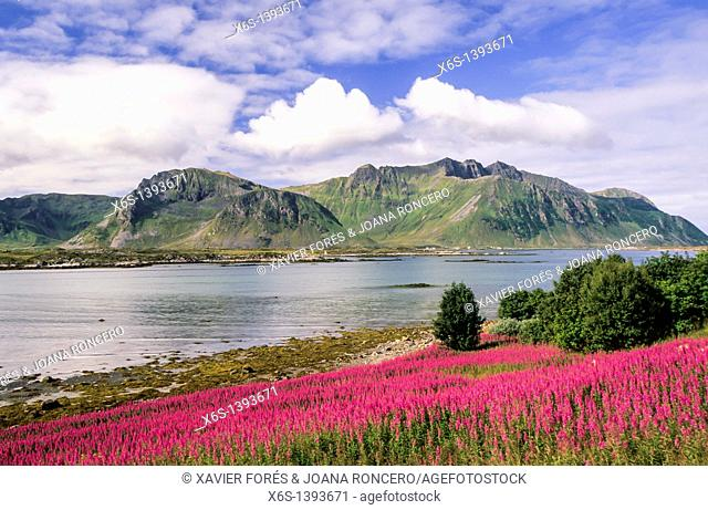Gimsøya, Lofoten Islands, Norway