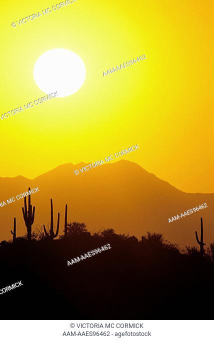 Cactus Sunset, Saguaro National Monument, Arizona
