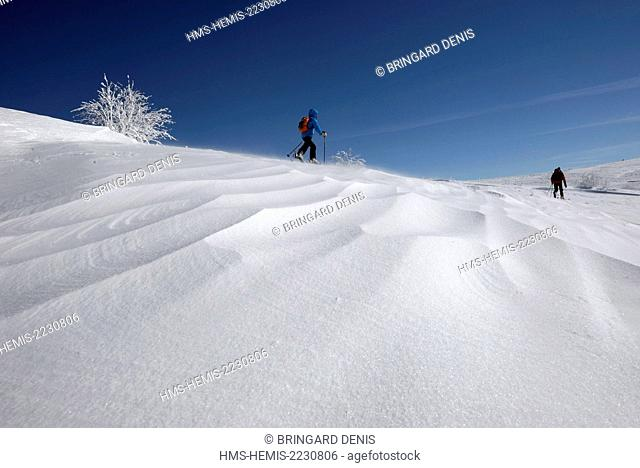 France, Haut Rhin, Hautes Vosges, Le Hohneck, skier hiking, snow blown