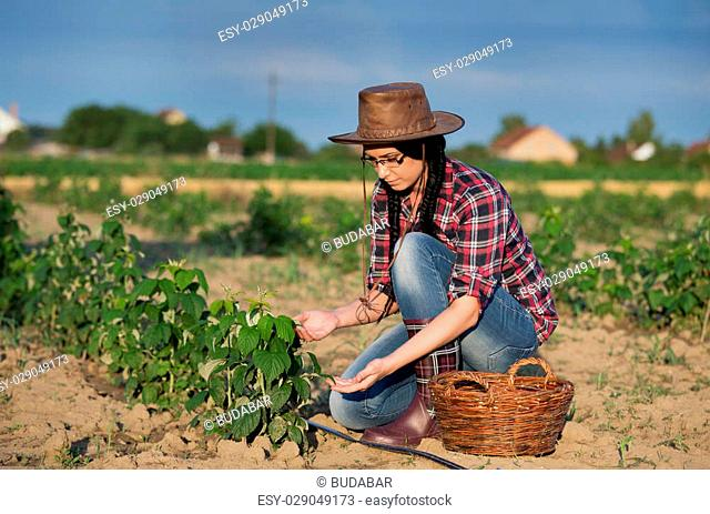 Young pretty farmer girl with hat looking at young raspberry plants on plantation