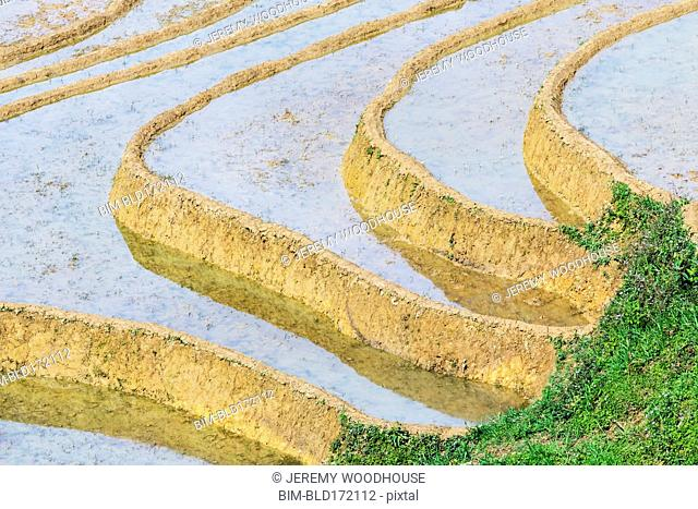 Aerial view of rice paddies in rural landscape