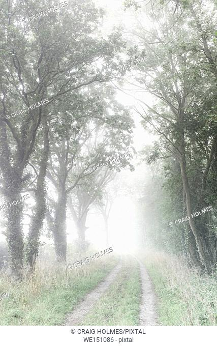 Fog in the English Countryside