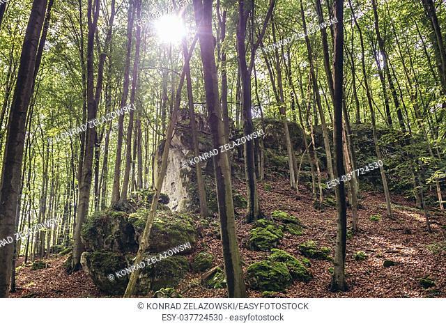 Limestone rocks in Nature Reserve Sokole Gory (Falcon Mountains) located in Polish Jura region in Silesian Voivodeship of southern Poland