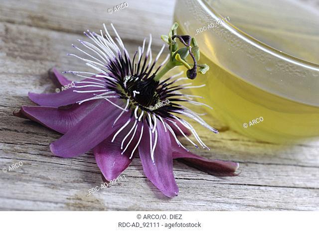 Passion Vine Flower cup of tea and blossom Passiflora incarnata indoor Passifloraceae