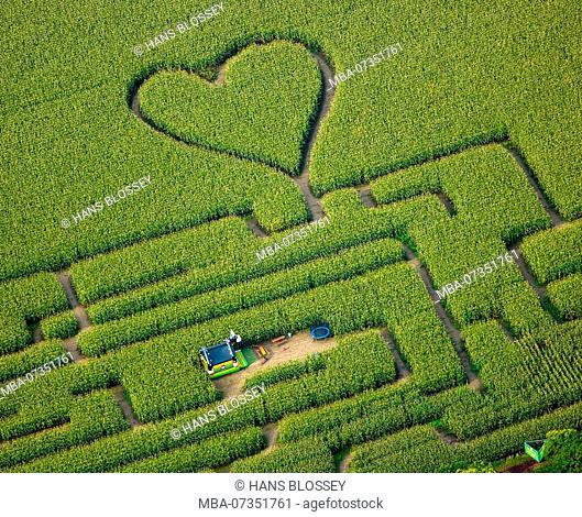 Heart in the corn field, corn maze in a corn field in Herten, paths in the corn field, green heart, heart shape, heart-shaped, Herten, Ruhr area