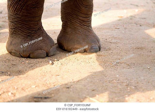 legs of Baby Elephant on road