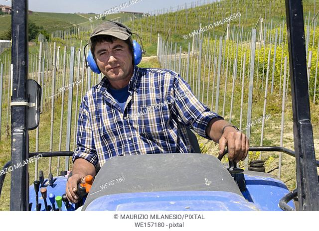 Driver on crawler tractor wearing noise-free headphones, he works among the rows of vineyards in the Langhe hills in Piedmont Italy