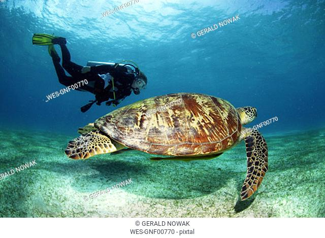 Philippines, scuba diver with green sea turtle, underwater view