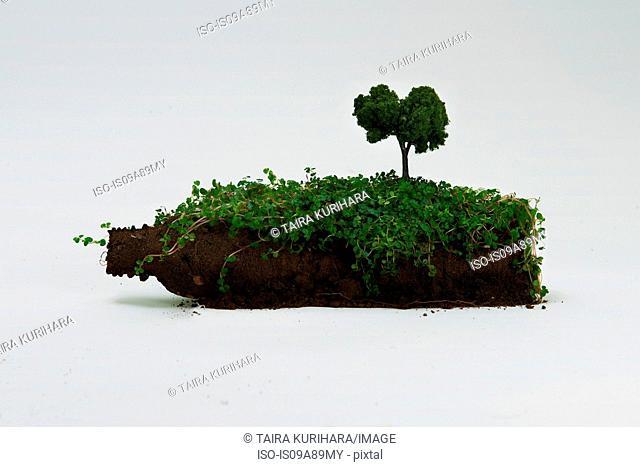 Soil in shape of bottle with miniature tree