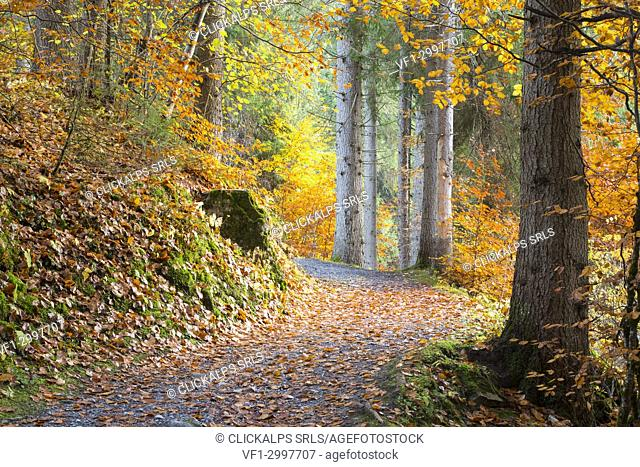 Pathway in the forest during autumn. Flims, Switzerland, Europe